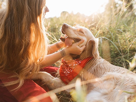 chien-anti-stress