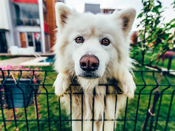 chien-anxiete