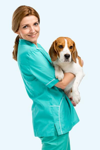 veterinaire-avis-zylkene