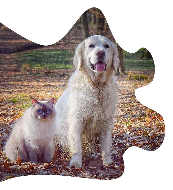 zylkene-chat-et-chien
