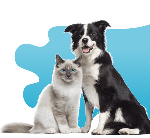 chat-chien-zylkene