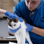 chat-peur-veterinaire