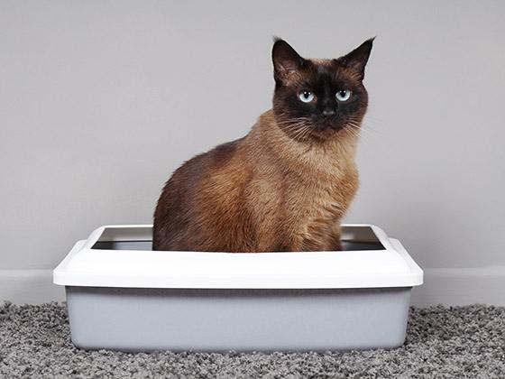 chat-urine-partout