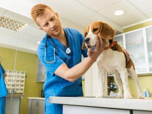 chien-peur-veterinaire